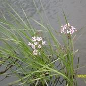 Kwiatki poszły do wody, czy woda przyszła do nich ?
