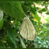 Motylek układa się do snu