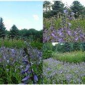 Ogród bylinowy w chorzowskim parku