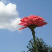 Oprócz błękitnego nieba,nic mi dzisiaj nie potrzeba:)