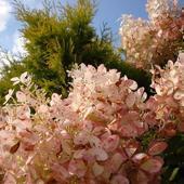 Pogodnego dnia w różowych kolorach