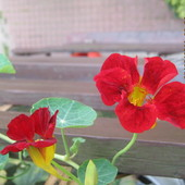 Troszke czerwieni