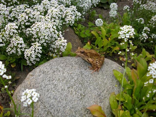Gość w ogródku