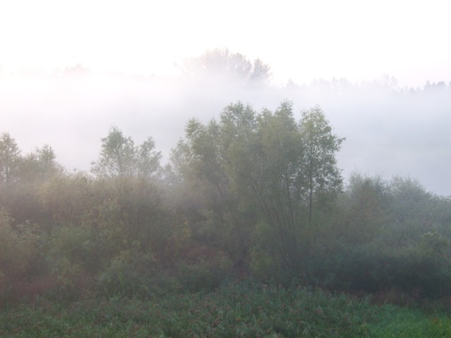 Poranna mgła nad Wartą
