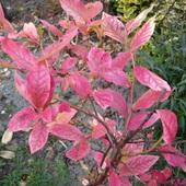 Bardzo łatwa zagadka:) Co to za roślinka ?
