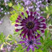I jeszcze jeden kwiatek :) Miłego dnia