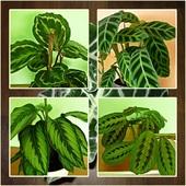 Kilka odcieni zieleni