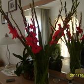 Kwiaty od przyjaciela