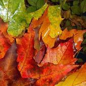Miłego wieczoru w kolorach jesieni
