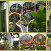 Mój kaktusowo-sukulentowy świat:)