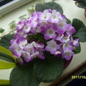 Nowy   kwiatek