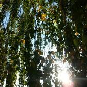 Od rana słonecznie a teraz brrr. .  Miłego dnia :)