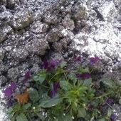 Ostatnie kwiatki na mojej działeczce!