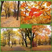 Piękna Złota Polska Jesień