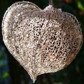Serce znalezione w ogrodzie...