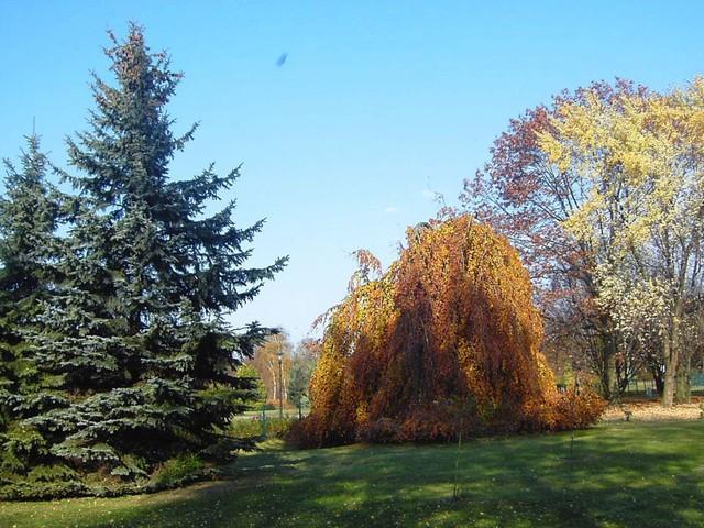 Jesień idzie przez park...