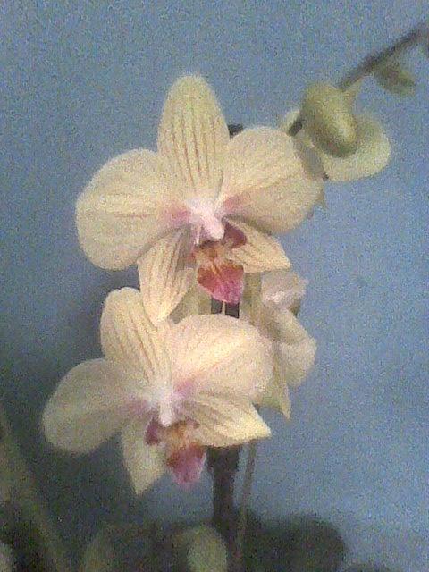 prezent od kuzynki, jeden kwiatek to bliźniak był