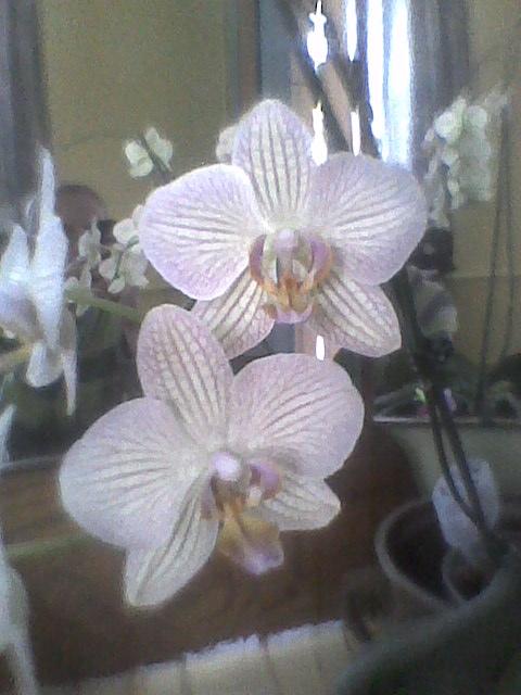 prezent z kwiaciarni i  miłe zaskoczenie jak po roku zakwitł