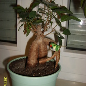 Mini drzewo :)