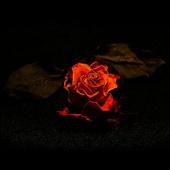 Nie czas żałować róż ...