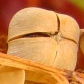 paczuszka z nasionkami