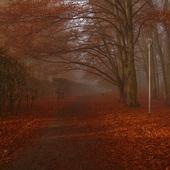 Park osnuty poranną mgłą