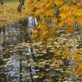 Rzeka liści