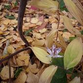 Ukryta wśród liści
