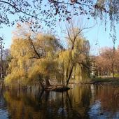 Wysepka w parku
