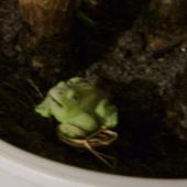 Żabcia NA SZCZĘŚCIE ;)
