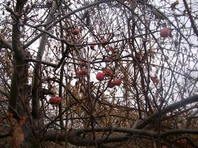 Grudniowe jabłuszka :))) Miłego wieczoru :)