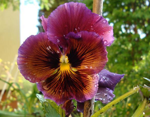 Mam w podobnym kolorze do kwiatów Tereski