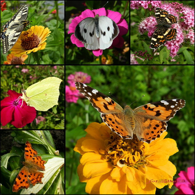 Motyle na czwartek.