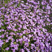 I dużo fioletowych maleństw...