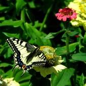 Motylasek Na Czwarte