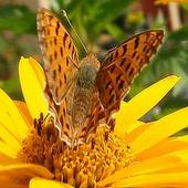 Motylkowy Czwartek -