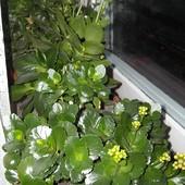 Parapet kwiatowy na zimę:)
