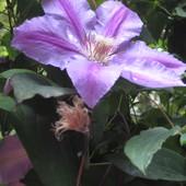 Pozdrawiam wszystkich na fioletowo :)