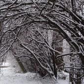 Przyszła Zima