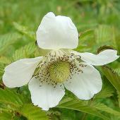 Urok Białych Kwiat�