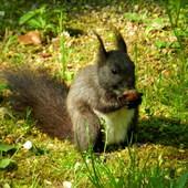 Wiewiórka włochata i mięciutka.