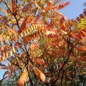 Wspomnienie złotej jesieni.