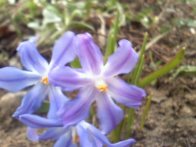 Czekam z utęsknieniem na pierwsze wiosenne kwiaty....