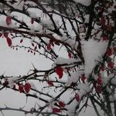 Dzisiaj rano zawitała zima