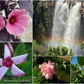 kwiatki....i sposób na ich podlewanie
