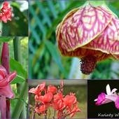 kwiaty Margarity