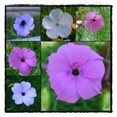 letnie kwiaty 2011