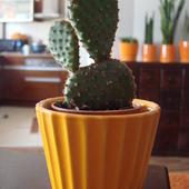 Maleńki kaktusik mojego synka