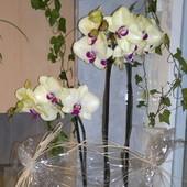 Orchidee w prezencie dla Ewy