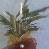 skrzydłokwiat;)